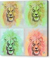 Lion X 4  Acrylic Print