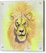 Lion Yellow Acrylic Print