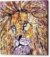 Lion1 Acrylic Print