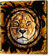 Lioness Face Acrylic Print