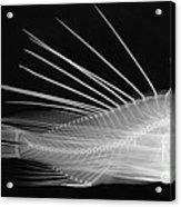 Lionfish X-ray Acrylic Print