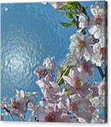Liquid Cherry Acrylic Print by Jen White