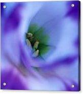 Lisianthus Acrylic Print by Kathy Yates