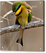 Little Bee Eater Acrylic Print