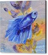 Little Blue Betta Fish Acrylic Print