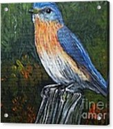 Little Blue Bird Acrylic Print