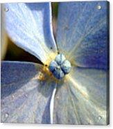 Little Blue Flower Acrylic Print
