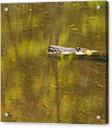 Little Carp River Bed 1 Acrylic Print