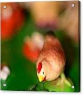 Little Chicken Acrylic Print