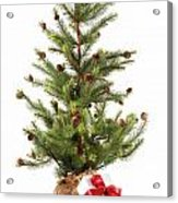 Little Christmas Tree With Red Ribboned Gifts On White  Acrylic Print by Sandra Cunningham
