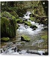 Little Creek 2 Acrylic Print