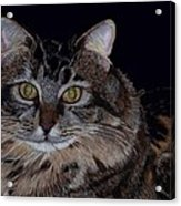 Little Girl - Maine Coon Cat Painting Acrylic Print