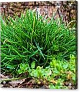 Little Grass Mound Acrylic Print