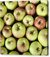 Little Green Apples Acrylic Print
