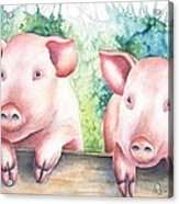 Little Piggies Acrylic Print
