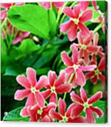 Little Pink Flowers Acrylic Print