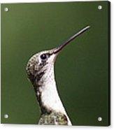 Little Princess - Hummingbird Acrylic Print