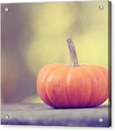 Little Pumpkin Acrylic Print by Amy Tyler