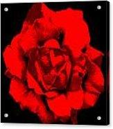 Little Red Flower ... Acrylic Print