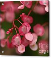 Little Red Hearts Acrylic Print
