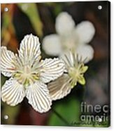 Little Wildflower Acrylic Print