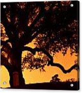 Live Oak- Cemetery- Natchez Mississippi Acrylic Print