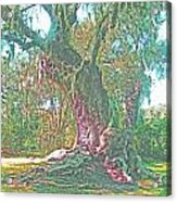 Live Oak On The Teche Acrylic Print
