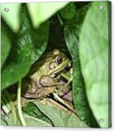Lives With The Green Beans Acrylic Print