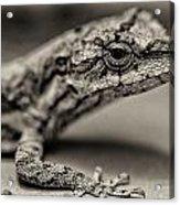 Lizard In Bw Acrylic Print