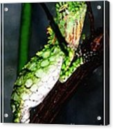 Lizard With Oil Painting Effect Acrylic Print