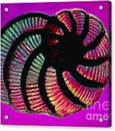 Lm Of Peneroplis Pertusus, A Shelled Acrylic Print