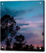 Loblelly Pine Silhouette Acrylic Print