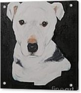 Lobo My Gentle Pitbull Acrylic Print
