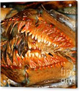 Lobster Mouth Acrylic Print