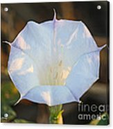 Loco Weed Flower Acrylic Print