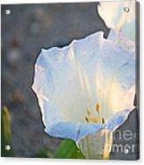 Loco Weed Flowers 1 Acrylic Print