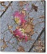Locust Fans Acrylic Print