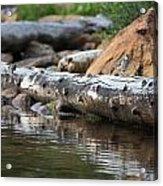 Log On The Lake Acrylic Print