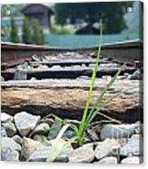 Lone Blade Of Grass On Railtracks Acrylic Print