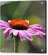Lone Flower Acrylic Print