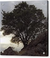 Lone Oak 2 Acrylic Print