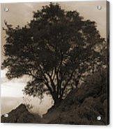 Lone Oak 2 Sepia Acrylic Print