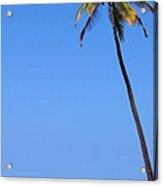 Lone Palm Acrylic Print