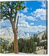 Lone Pine At Half Dome Acrylic Print