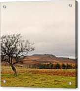 Lone Tree And Higger Tor Acrylic Print