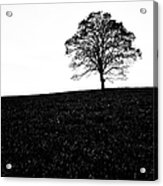 Lone Tree Black And White Silhouette Acrylic Print