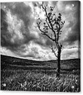 Lone Tree On The Ayrshire Moors Acrylic Print