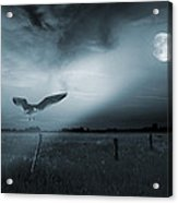 Lonely Bird In Moonlight  Acrylic Print by Jaroslaw Grudzinski