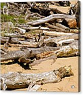 Lonely Driftwood Acrylic Print
