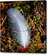 Lonely Feather Acrylic Print